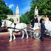 Blue River Carriage Company and Pony Parties