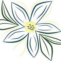 Mandi Designs