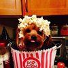 Kimmie's Gourmet Popcorn