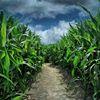 Talladay Farms' Corn Maze