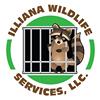 Illiana Wildlife Services