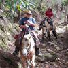 Supreme Horse Walker, LLC