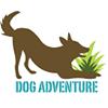Dog Adventure - Centro de Comportamento Canino