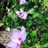 English Gardens Royal Oak