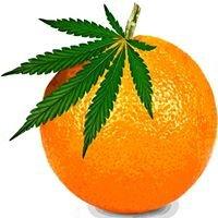 Orange Coast Medical