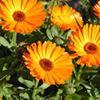C&D Floral
