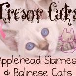 Tresor Siamese & Balinese Cats
