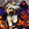 Fairy Tails Dog Spaw