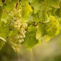 SummerGate Winery