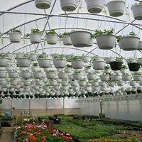 Casey's Greenhouses