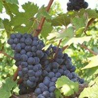 Westwood Wines