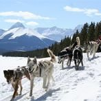 Mad Dogs & Englishmen Dogsled Expeditions Inc