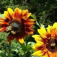 Grand Forks Learning Garden