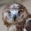 The Fund for Animals Wildlife Center