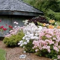 Friends of SLGS ~ Slocan Lake Garden Society