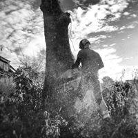Tree climbing Sweden