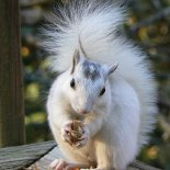 Squirrel Wholistic Happiness shop