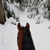 Charlie Horse Equine Adventures