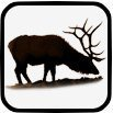 Upper Snoqualmie Valley Elk Management Group