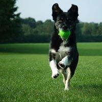 Pup Scoop