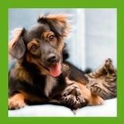 VETMED Emergency & Specialty Veterinary Hospital