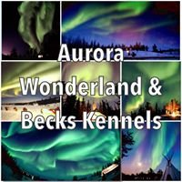 Aurora Wonderland Tours & Becks Kennels