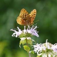 NJ Audubon -- Scherman Hoffman Sanctuary