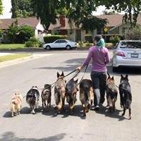 Pet Peeves Training, LLC