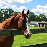 Celtic Charms Therapeutic Horsemanship
