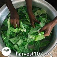 Harvest107
