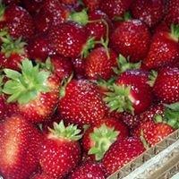 Bohringer's Fruit Farm