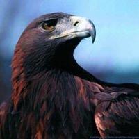 Johnson City Eagles 2644