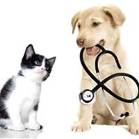 Veterinary Medical Center of Caldwell