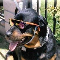 DawgSquad AnimalRescue