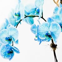 Lee's Orchid