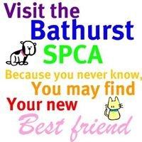 Bathurst Gloucester SPCA