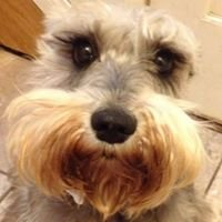 Miniature Schnauzers & Friends Rescue