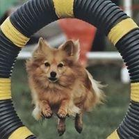 FunQuest Dog Sports