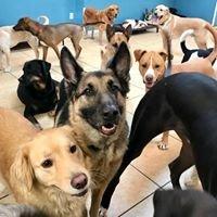 Doggie Dayz Daycare and Training Facility, LLC