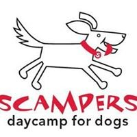 Scampers Daycamp for Dogs