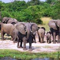 Experiential safaris