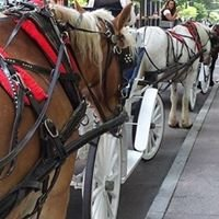 Southern Breezes Carriages & Charlotte Center City Carriage Tours
