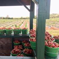 Kelley's Berry Farm