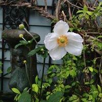 Persimmons Garden Gallery