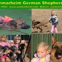 Zanmarheim German Shepherds Breeders of Top Quality Puppies