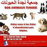 SOS Animaux Tunisie