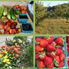 Orchard Country Produce