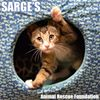 Sarge's Animal Rescue Foundation, Inc.