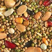 Eden Seeds