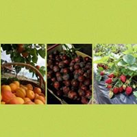 Lomas Orchards